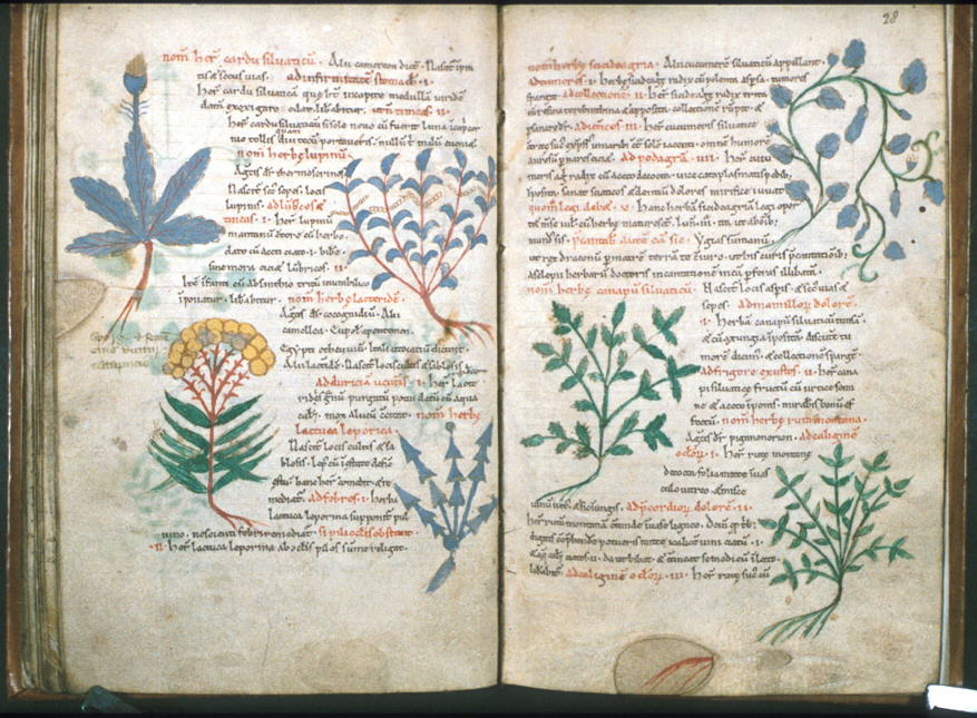 islamic science in the medieval era essay View medieval jewish-islamic science (medicine) medieval arabic-hebrew medical terminology research papers on academiaedu for free.